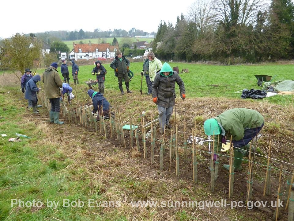 Hedge Planting on Village Green 13 Feb 2016